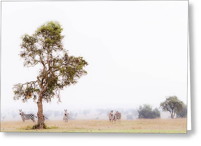 Overalls Greeting Cards - Zebra In The Mist Greeting Card by Mike Gaudaur