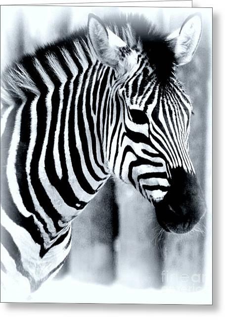 Struckle Greeting Cards - Zebra Greeting Card by Kathleen Struckle