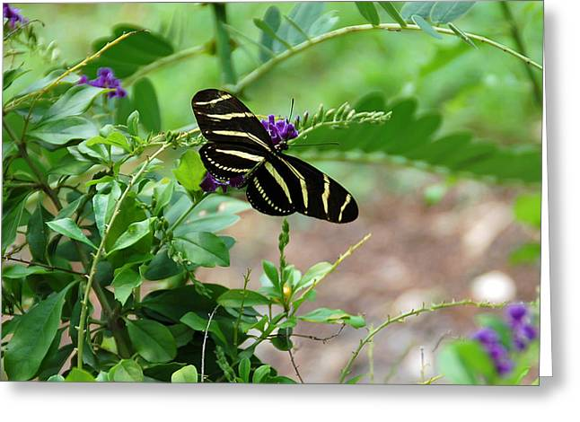 Pretty Flowers Greeting Cards - Zebra Longwing Butterfly Floral Greeting Card by Aimee L Maher Photography and Art