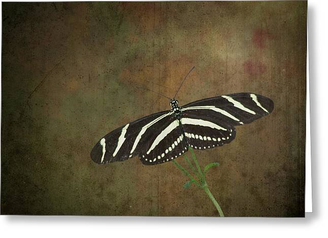 Strength Spiritual Greeting Cards - Zebra Longwing  Butterfly-1 Greeting Card by Rudy Umans