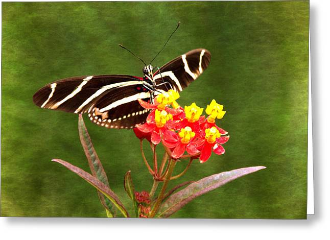 Jacksonville Greeting Cards - Zebra Longwing III Greeting Card by Dawn Currie
