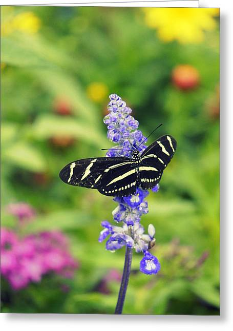Pinks And Purple Petals Greeting Cards - Zebra Longwing Greeting Card by Laurie Perry