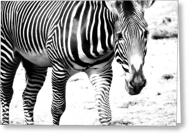Zebra Patterns Greeting Cards - Zebra Greeting Card by Michelle Calkins
