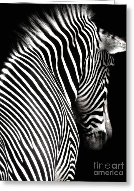 Zebra On Black Greeting Card by Elle Arden Walby