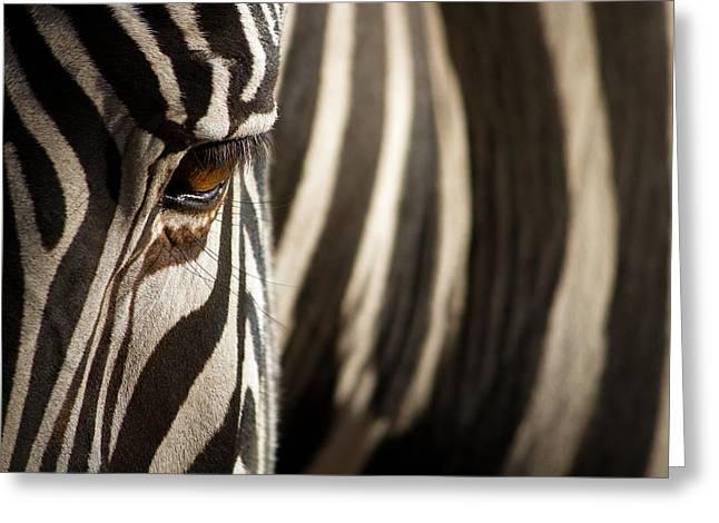 Eyelash Greeting Cards - Zebra Greeting Card by Patrick Latter