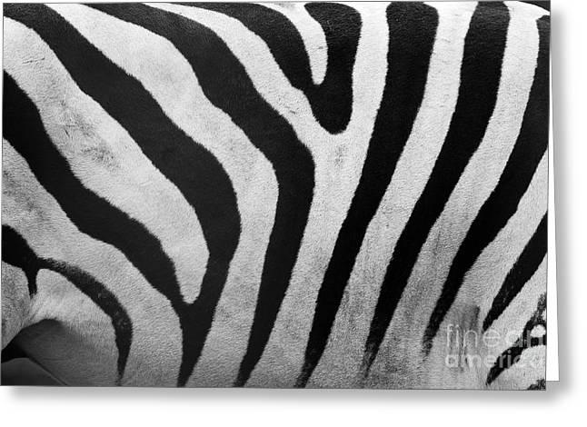 Fur Stripes Greeting Cards - Zebra pattern close up Greeting Card by Michal Bednarek