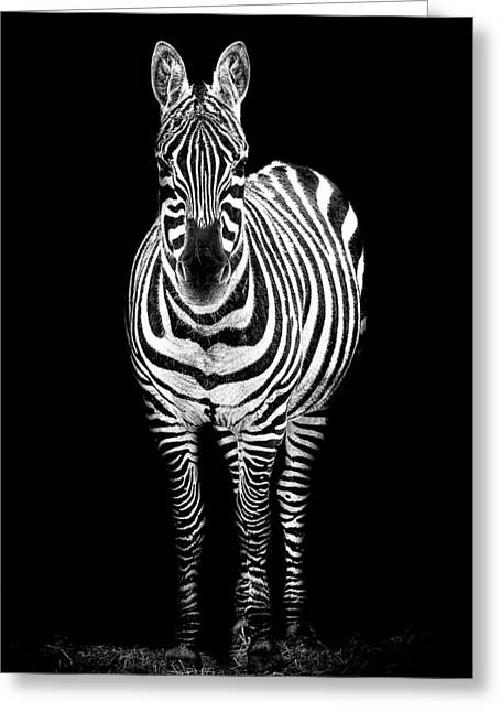 Zebra Greeting Card by Paul Neville