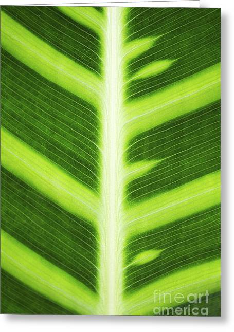 Color Green Greeting Cards - Zebra Plant Leaf Pattern Greeting Card by Tim Gainey