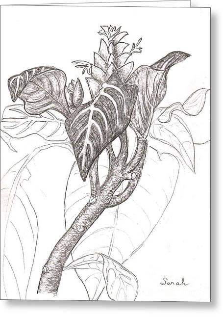 Office Plants Drawings Greeting Cards - Zebra Plant Greeting Card by Sarah Loft
