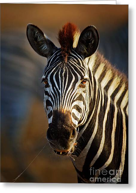 Shoulders Greeting Cards - Zebra close-up portrait Greeting Card by Johan Swanepoel
