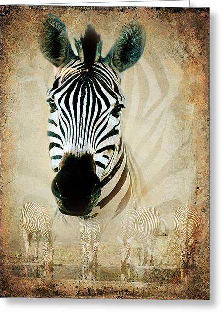 Zebra Profile Greeting Card by Ronel Broderick