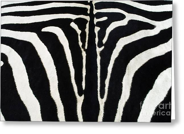 Animal Body Part Greeting Cards - Zebra Skin Botswana Greeting Card by Frans Lanting MINT Images