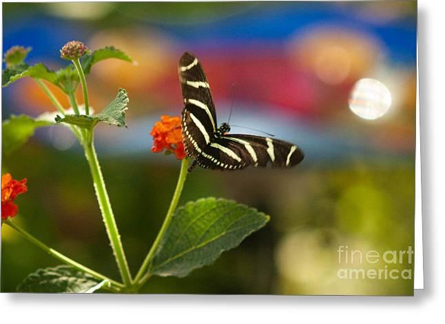 Zebra Striped Butterflies Greeting Card by Cari Gesch