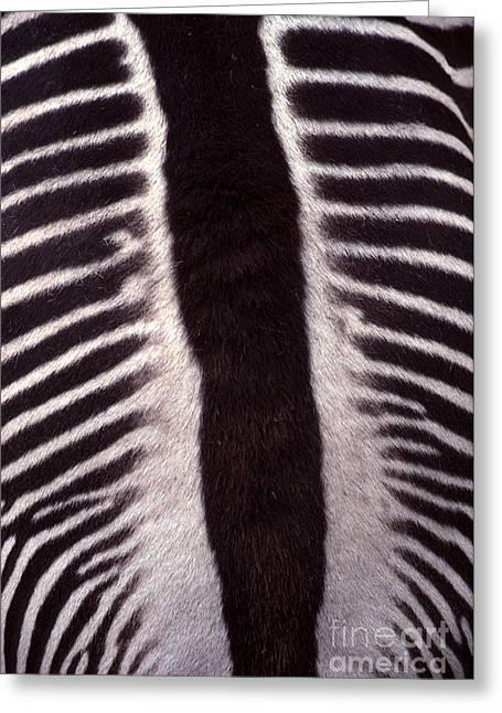 Opposing Greeting Cards - Zebra Stripes Closeup Greeting Card by Anna Lisa Yoder
