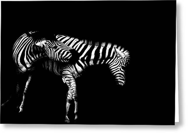 Zebra Stripes Greeting Card by Martin Newman