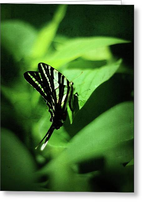 Lepidopterist Greeting Cards - Zebra Swallowtail Butterfly Greeting Card by Rebecca Sherman