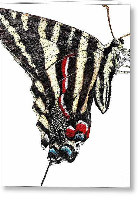 Marcelli Greeting Cards - Zebra Swallowtail Butterfly Greeting Card by Roger Hall