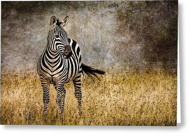 Nature Photographers Greeting Cards - Zebra Tail Flick Greeting Card by Mike Gaudaur