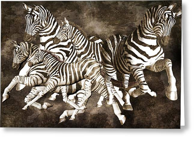 Dimension Greeting Cards - Zebras Greeting Card by Betsy C  Knapp