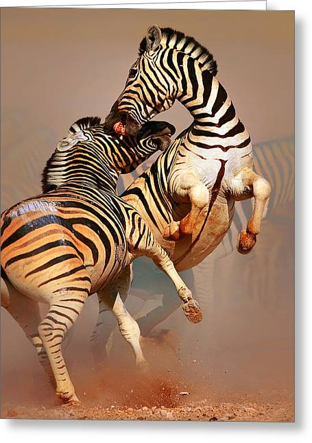 Fight Greeting Cards - Zebras fighting Greeting Card by Johan Swanepoel