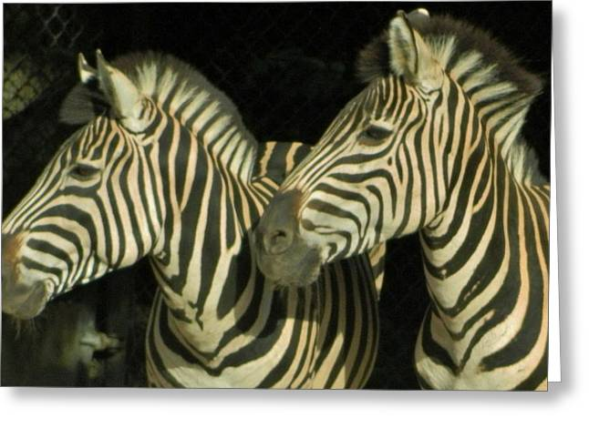 Posters On Sculptures Greeting Cards - Zebras Greeting Card by Gunter  Hortz