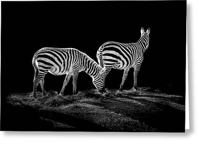 Zebras Greeting Cards - Zebras  Greeting Card by Paul Neville