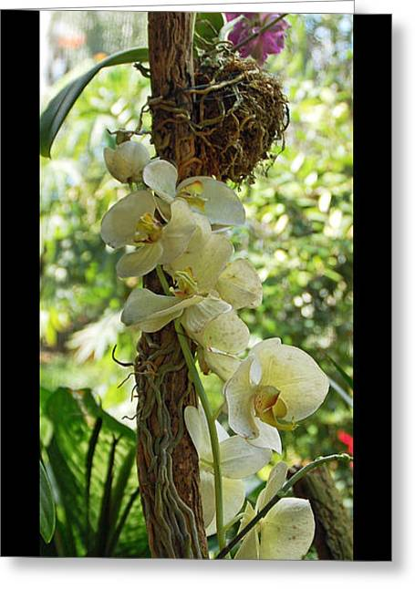 Botany Greeting Cards - Zen Greeting Card by Aimee L Maher Photography and Art