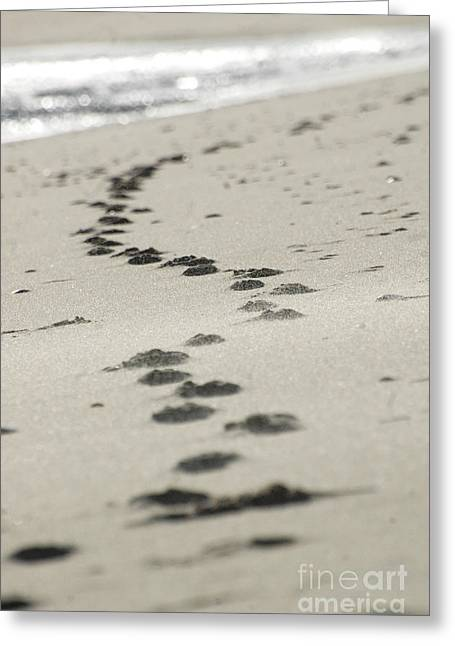 Hamptons Digital Art Greeting Cards - Zen Footprints in the sand Greeting Card by AdSpice Studios