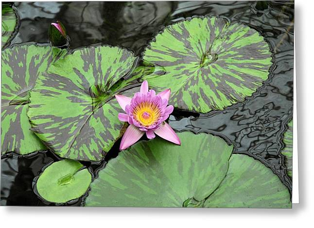 Lotus Full Bloom Greeting Cards - Zen Lotus  Greeting Card by Michel Kotski