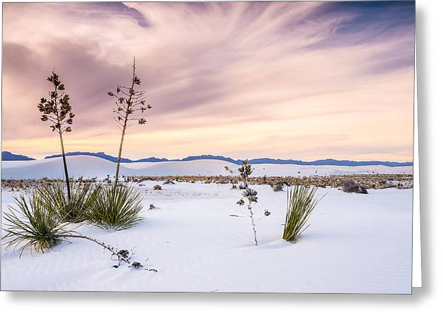 Heavenly Greeting Cards - Zen of Yuccas in White Sands Greeting Card by Ellie Teramoto