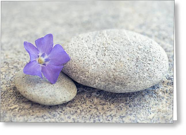 Space Flower Greeting Cards - Zen periwinkle Greeting Card by Delphimages Photo Creations
