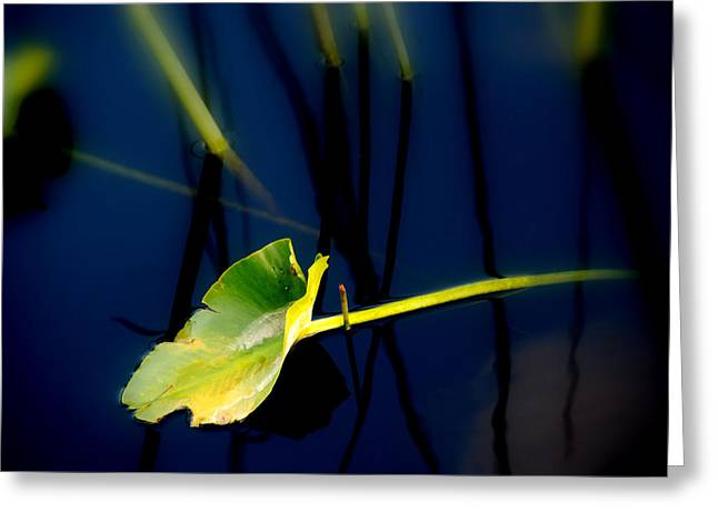 Water Lilly Greeting Cards - ZEN Photography V Greeting Card by Susanne Van Hulst