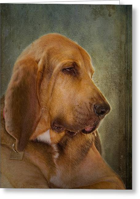 Blood Hound Greeting Cards - Zeus Greeting Card by Robert Krausankas