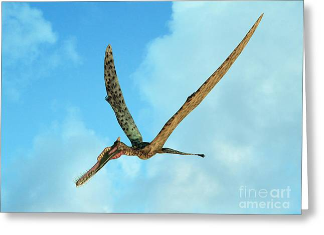 Flying Animal Greeting Cards - Zhenyuanopterus, A Genus Of Pterosaur Greeting Card by Walter Myers