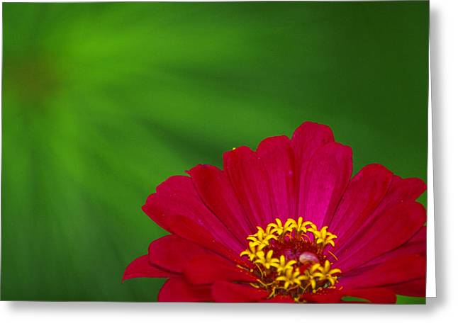 Monica Veraguth Greeting Cards - Zinnia and a Green Star Greeting Card by Monica Veraguth