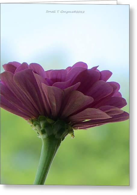 Flowers Against The Sky Greeting Cards - Zinnia Dream Greeting Card by Sonali Gangane