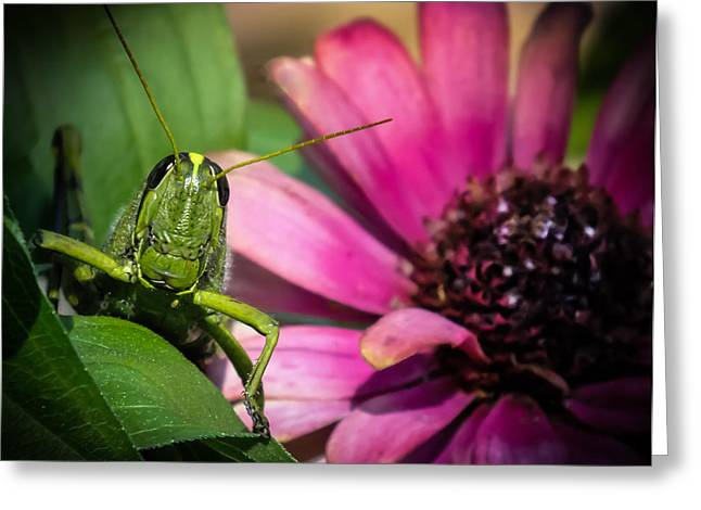 Grasshoppers Greeting Cards - Zinnia Surprise Greeting Card by Karen Wiles