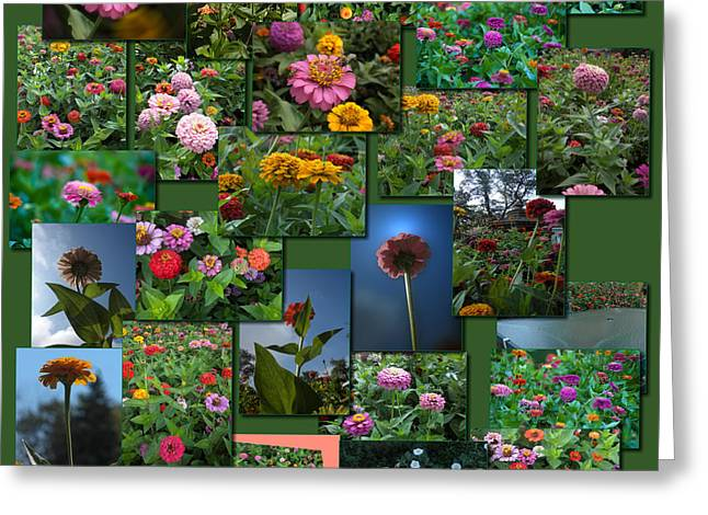 Coller Greeting Cards - Zinnias Collage Square Greeting Card by Thomas Woolworth