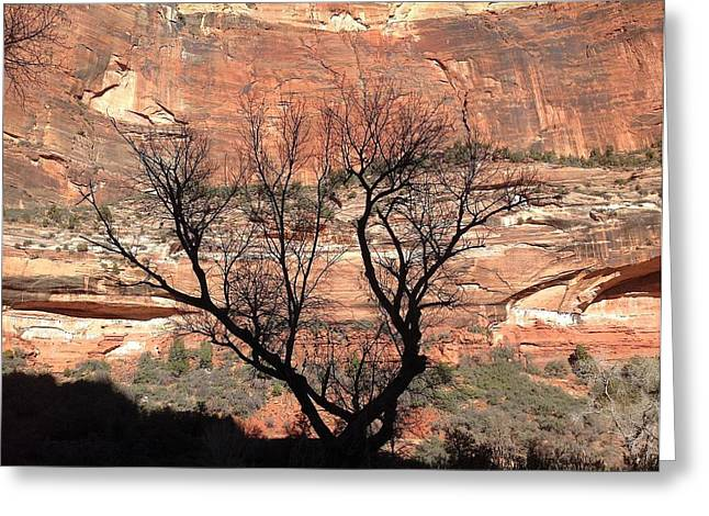 Zion Canyon Tree #1 Greeting Card by Feva  Fotos