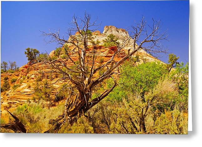 Zion Desert Greeting Card by Greg Norrell