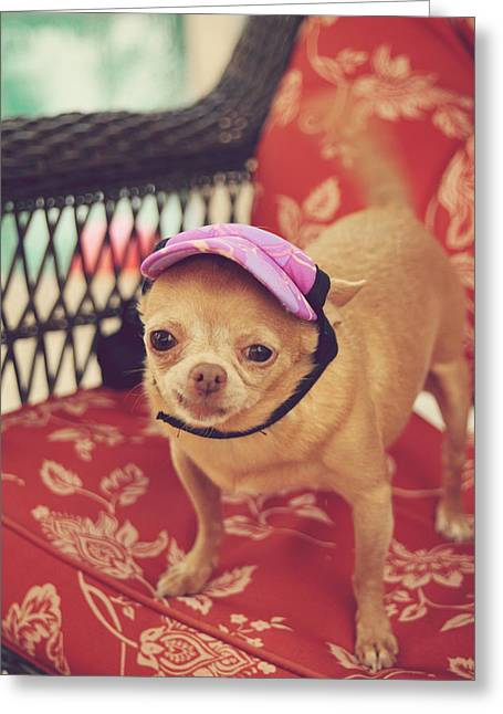 Happy Dogs Cute Dogs Greeting Cards - Zoes Visor Greeting Card by Laurie Search