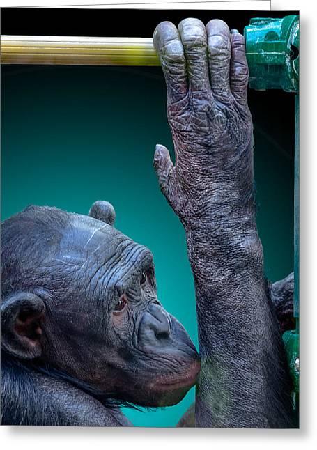 Humanlike Greeting Cards - Zoo Subway Greeting Card by Brian Stevens