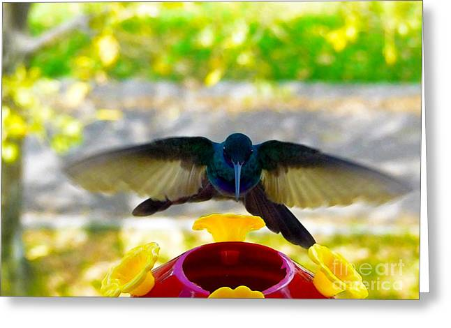 Hovering Greeting Cards - Zooming In Greeting Card by Al Bourassa
