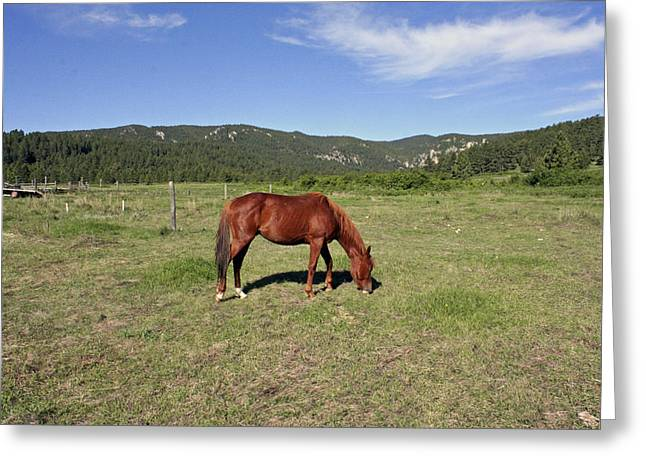 The Horse Pyrography Greeting Cards - Zortman Little Rocky Mountains  Greeting Card by Larry Stolle