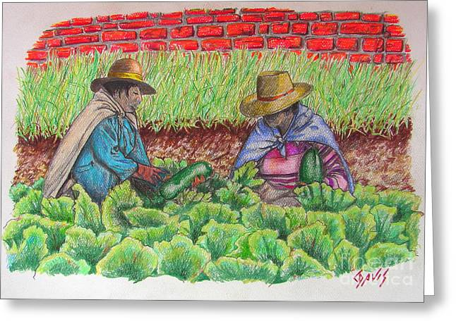 Harvest Drawings Greeting Cards - Zucchini in Peru Greeting Card by Lew Davis