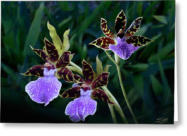 Epiphyte Greeting Cards - Zygopetalum Orchid Greeting Card by Matthew Schwartz