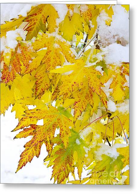 Snow Tree Prints Greeting Cards -  Autumn Snow Portrait Greeting Card by James BO  Insogna