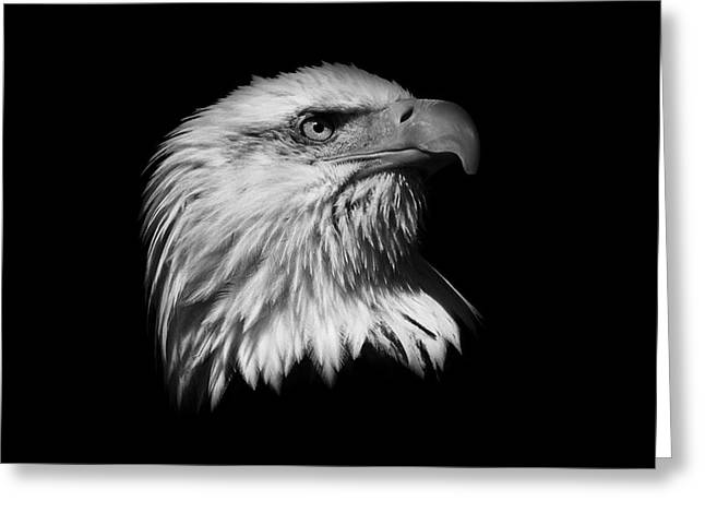 Independance Greeting Cards -  Black and White American Eagle Greeting Card by Steve McKinzie