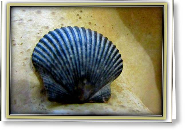 Seaside Decor Posters Greeting Cards -  Blue Black Calico Scallop Greeting Card by Danielle  Parent
