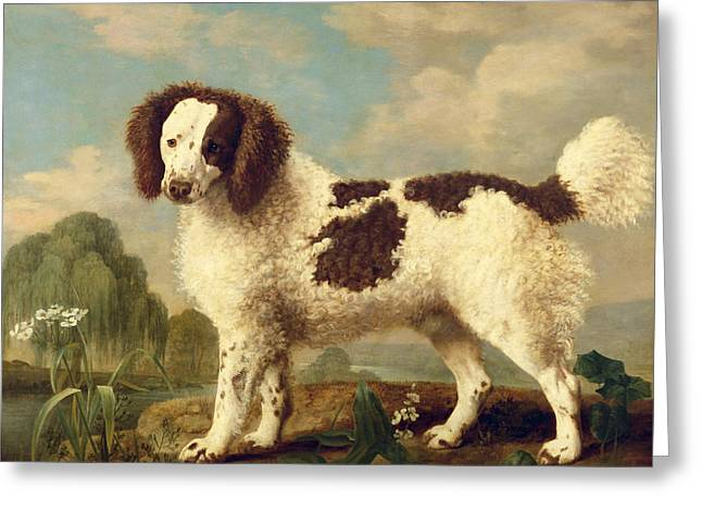 River. Clouds Greeting Cards -  Brown and White Norfolk or Water Spaniel Greeting Card by George Stubbs